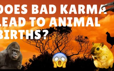 Does Bad Karma's lead to future births of Animals?Part 4